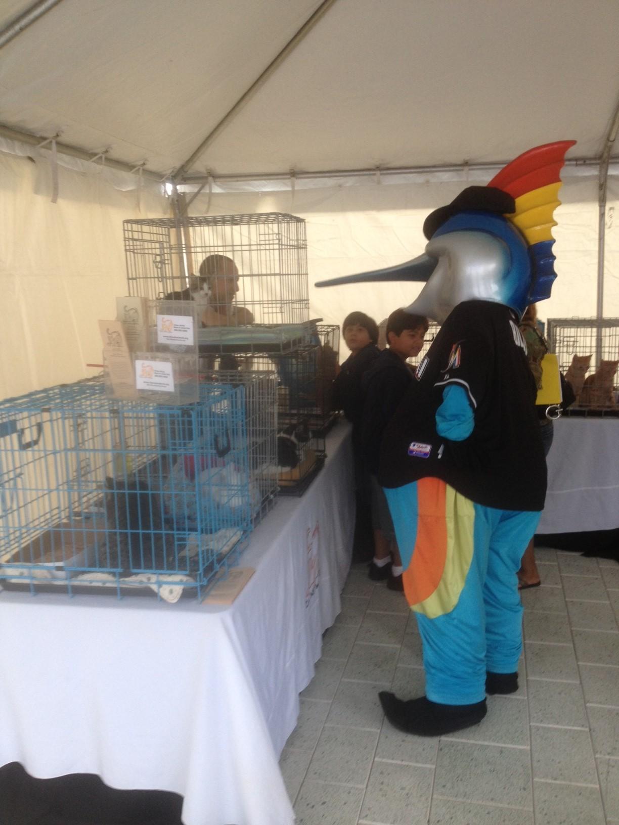 Marlins Adoption Event