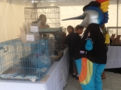 Marlins Adoption Event