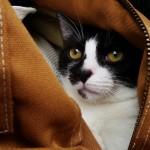 Help a Cat in Miami