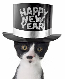 http://thecatnetwork.org/wp-content/uploads/2010/12/HappyNewYearCat1.jpg