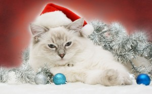 A Holiday Message From The Cat Network