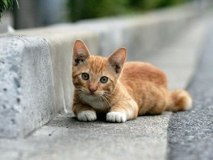 Help Us Help Homeless Cats