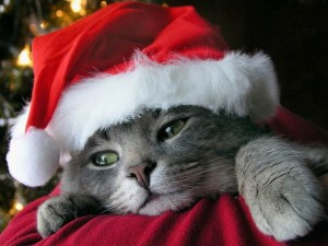 hd-wallpapers-christmas-kitten-widescreen-wallpaper-1024x768-wallpaper