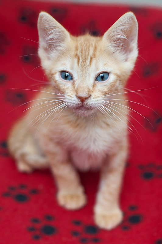 kitten-red-background